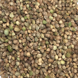 Whole Hemp Seed 20Kg