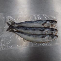 "Small Joey Mackerel Whole 3 pack (6""-8"")"