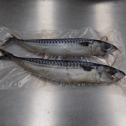 "Jumbo Mackerel Whole 2 Pack (11""-13"")"