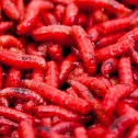 Dead Red Maggot